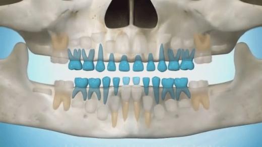 Acompanhe o nascimento dos dentes de leite e permantes nessa apresentação da linha do tempo